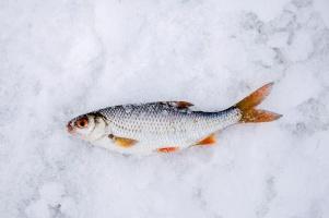 Сахалинские власти предлагают Росрыболовству скорректировать правила по любительской рыбалке