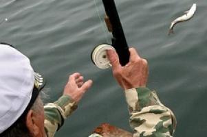 В Госдуме на совещании с участием ОНФ было решено активизировать принятие закона о любительском рыболовстве